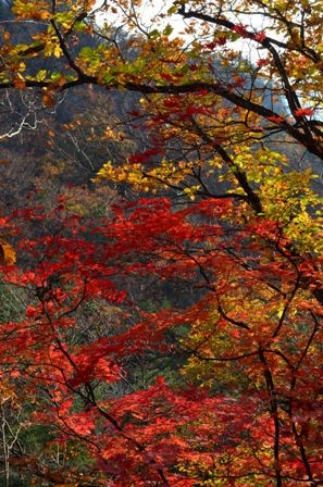 Bukhansan National Park sunny red trees