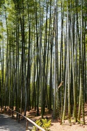 Kodaiji Temple bamboo forest