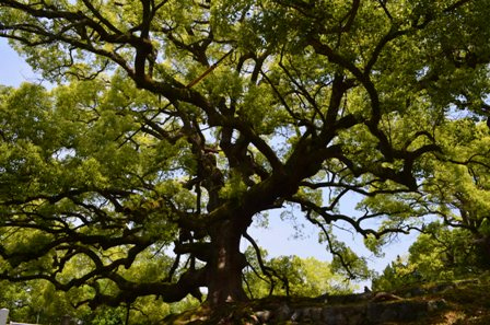 Kyoto interesting tree