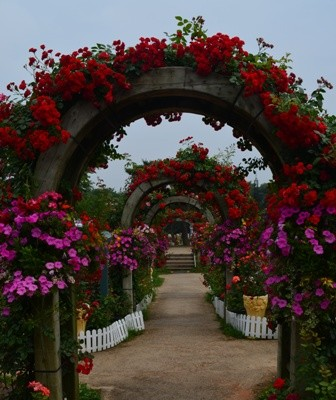 Rose Festival flower tunnels