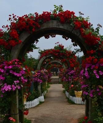 Rose Festival flower tunnels