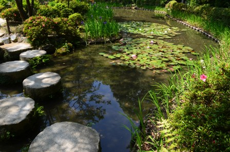 Shinen Garden waterlily pond overhead view