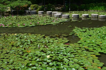 Shinen Garden waterlily pond stepping stones