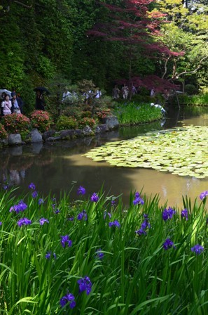 Shinen Gardens irises pond