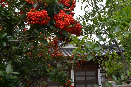 Andong Hahoe Maeul hut with orange berry tree
