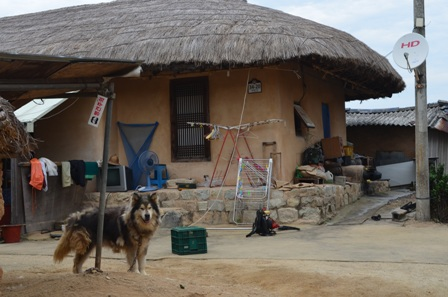 Andong Hahoe Maeul thatched hut with fluffy dog