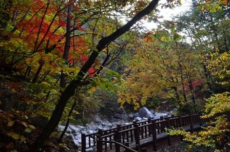 Sibiseonnyetang bridge and colored trees