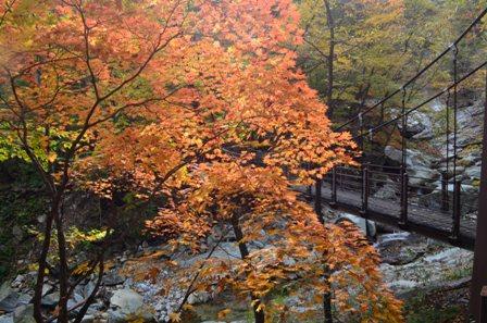 Sibiseonnyetang bridge and orange tree