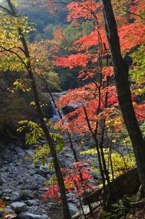 Sibiseonnyetang bright trees and waterfall