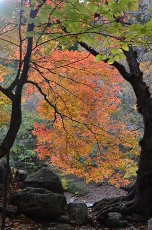 Sibiseonnyetang orange tree pathway