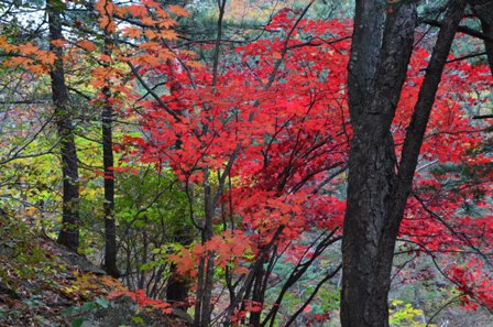 Sibiseonnyetang red tree pathway