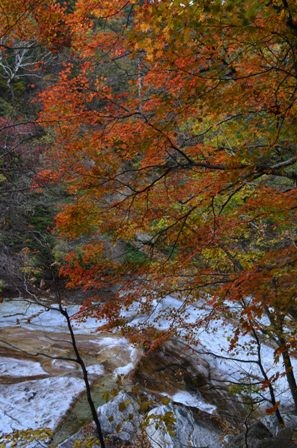 Sibiseonnyetang rushing river orange tree