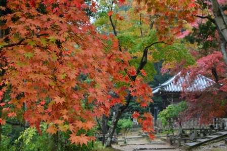 Kyoto Arashiyama Nishion Temple colorful foliage