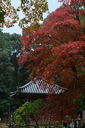Kyoto Arashiyama Nishion Temple red trees