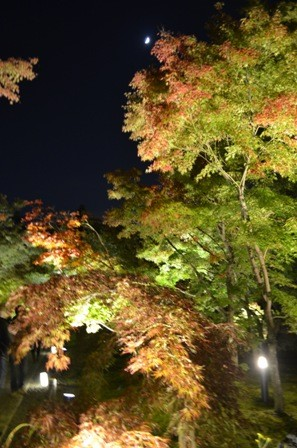 Kyoto Night Eikando foliage with moon