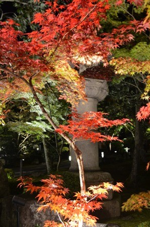 Kyoto Night Eikando red foliage