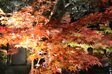 Kyoto Night Eikando red trees