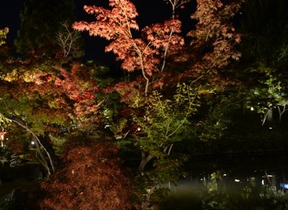 Kyoto Night Eikando reflection pool