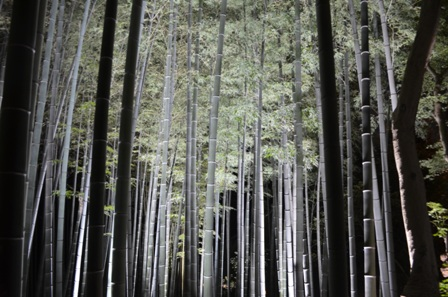 Kyoto Night Shorenin Temple bamboo forest