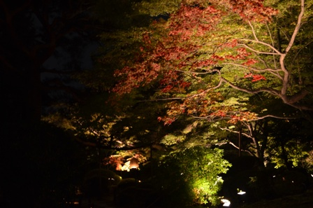 Kyoto Night Shorenin Temple colored foliage