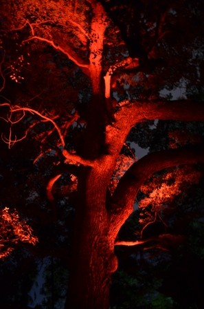 Kyoto Night Shorenin Temple red tree