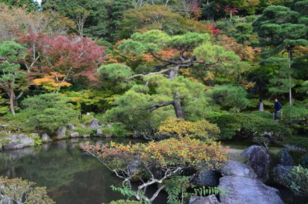 Kyoto Searching Ginkakuji garden foliage