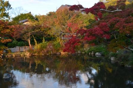 Kyoto Searching Marayuma Park foliage