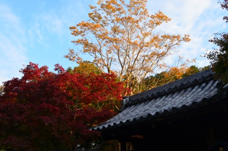 Kyoto Searching Nanzenji foliage