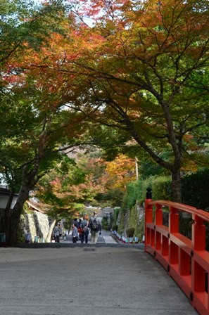 Kyoto Searching Sanzenji foliage bridge