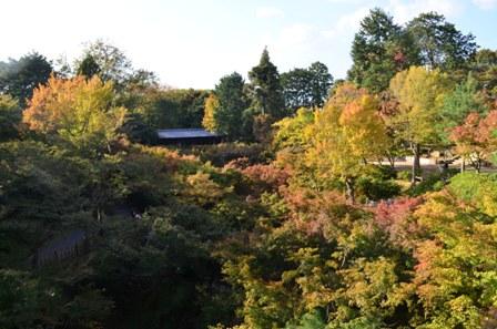 Kyoto Searching Tofukuji Temple foliage