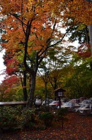 Kyoto Takao colorful picnic site
