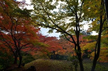 Kyoto Takao colorful roof