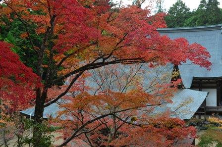 Kyoto Takao colorful tree roof