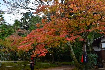 Kyoto Takao colorful trees on ground