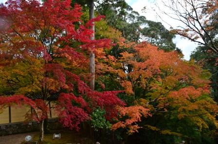 Kyoto Takao colorful trees