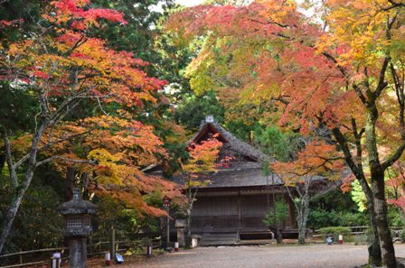 Kyoto Takao out temple and colorful trees