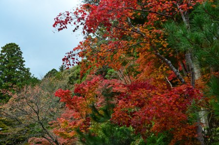 Kyoto Takao red and orange trees