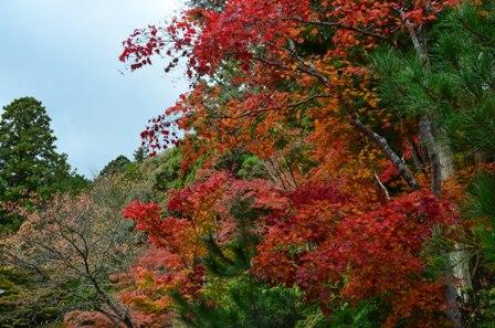 Kyoto Takao red and orange trees