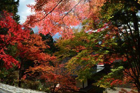 Kyoto Takao sunlight trees