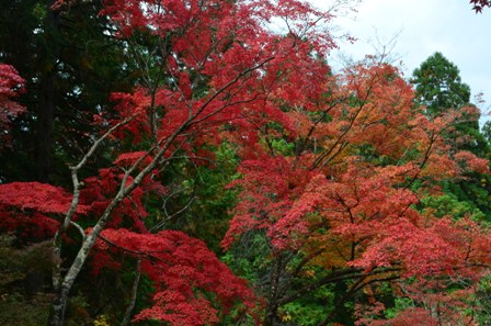 Kyoto Takao Temple red trees
