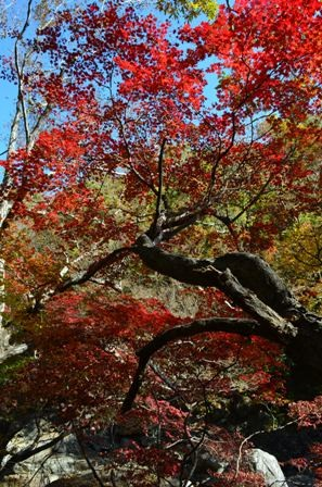 Piagol Valley branches with red leaves