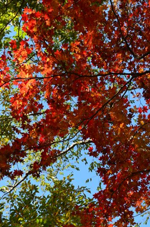 Piagol Valley red and orange overhead foliage