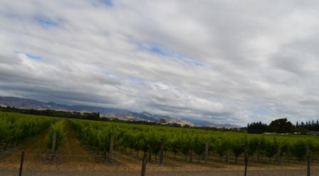 Wine Bike Trip-7