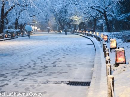 Toyko winter 2014-29