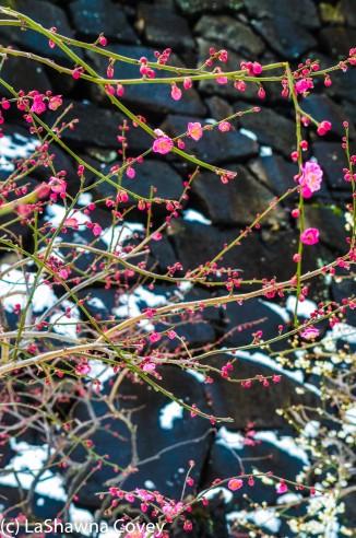 Toyko winter 2014-67