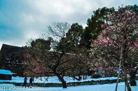 Toyko winter 2014-71