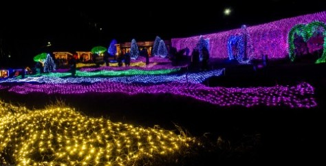 Herb Island Lighting Festival-3