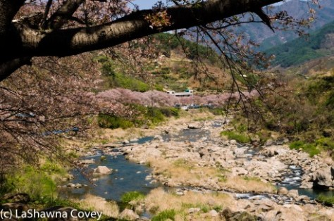 Hwage Cherry Blossoms and Buril Falls-4