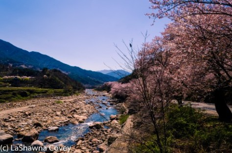 Hwage Cherry Blossoms and Buril Falls-9