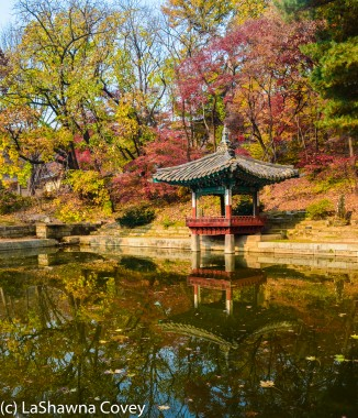 Changdeokgung Palace by day and night-11